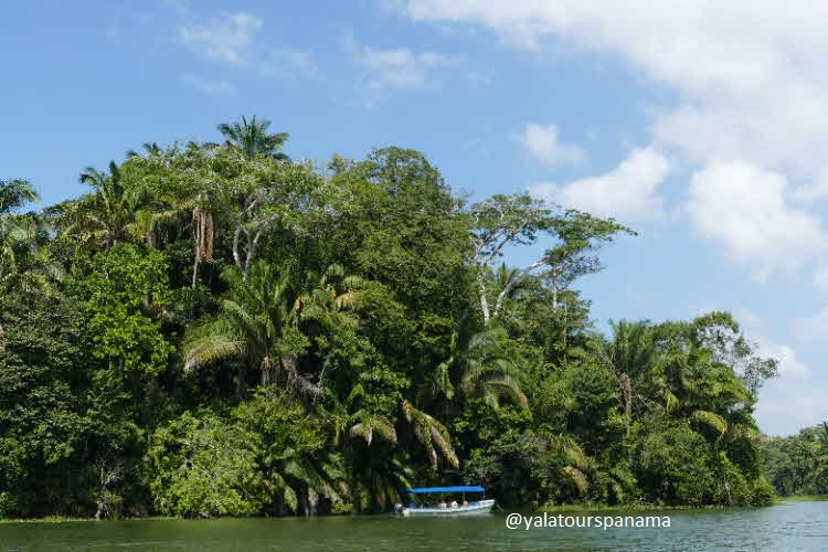 Boat tour at Panama Canal Gatun Lake Yala Tours Panama