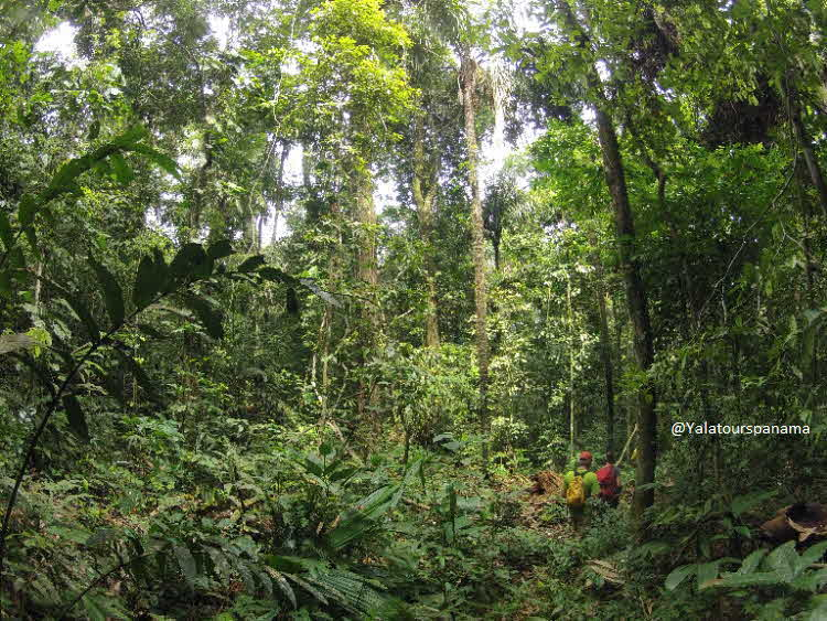 Darien Expedition Panama