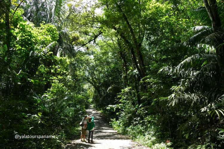 Soberania National Park hike walk or nature
